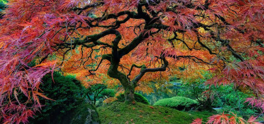 Featured-Most-Amazing-Trees