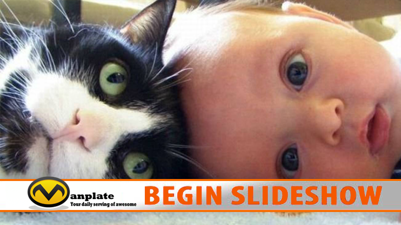slideshow-babies-kittens
